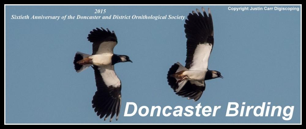 Doncaster Birding